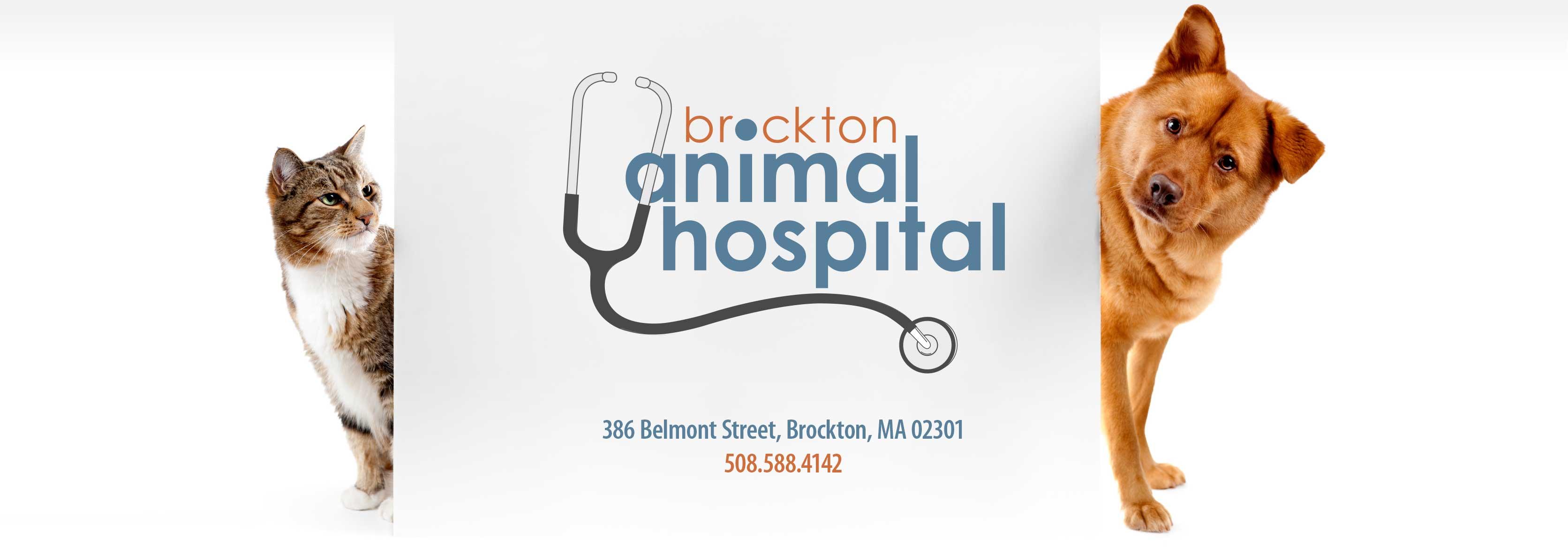 Boston Veterinary & Pet Care