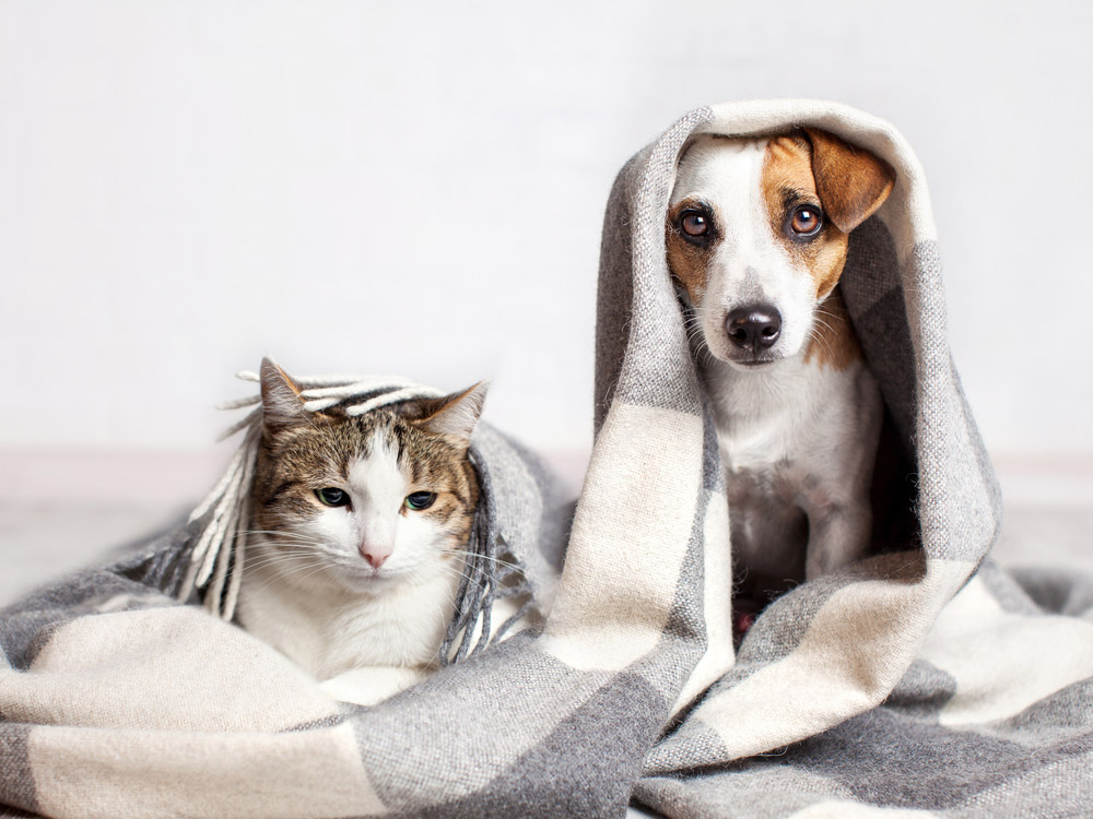 Canine and Feline Epidemic